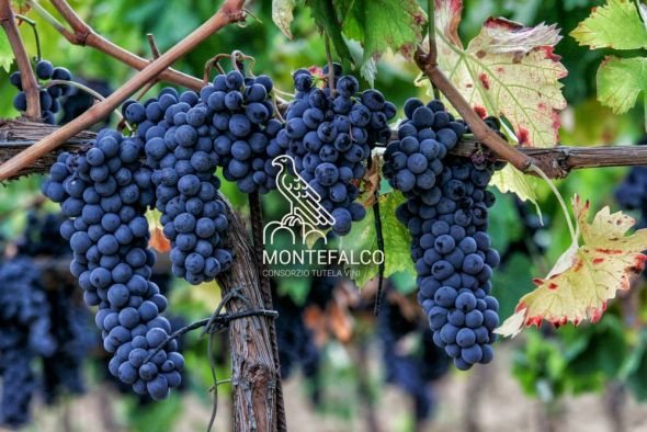 Beitragsbild Weingebiet Montefalco Sagrantino. Photo: www.facebook.com/consorzio.montefalco