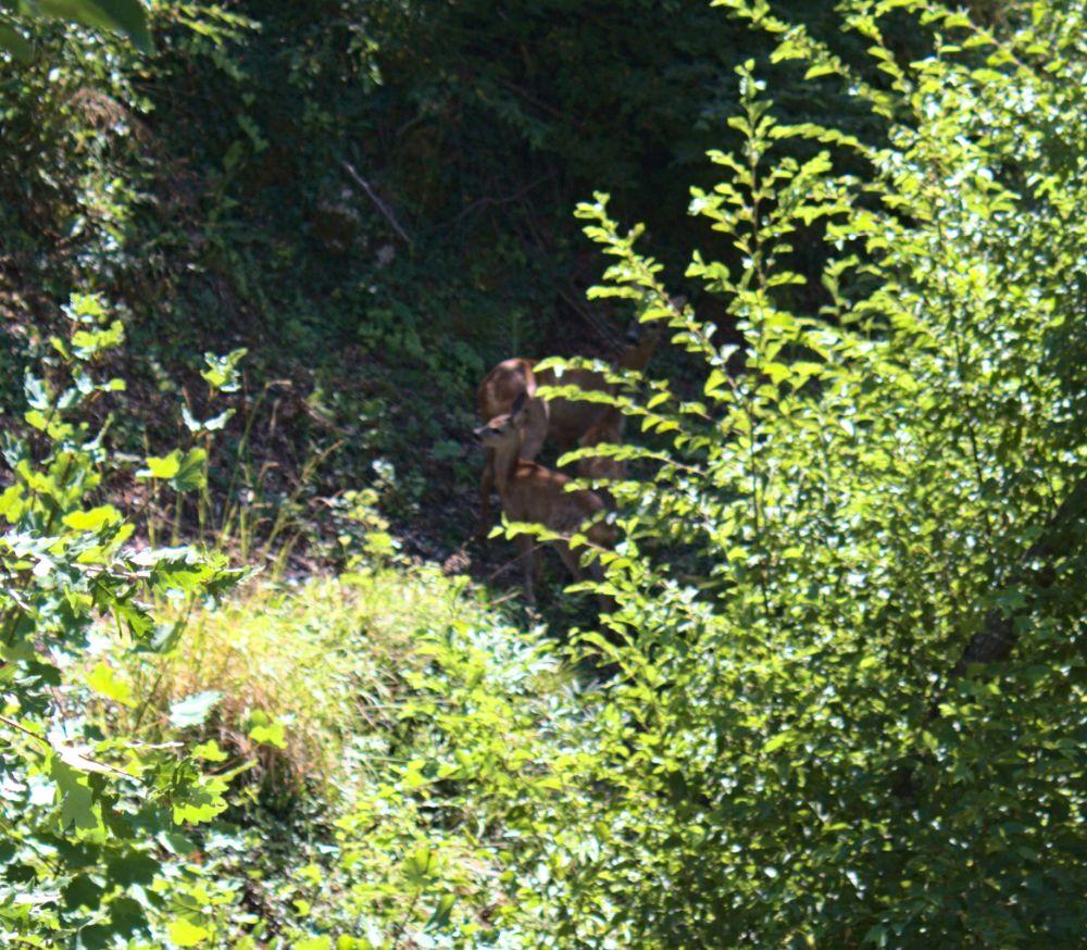 Während unserer Radtour sahen wir ein paar junge Rehe