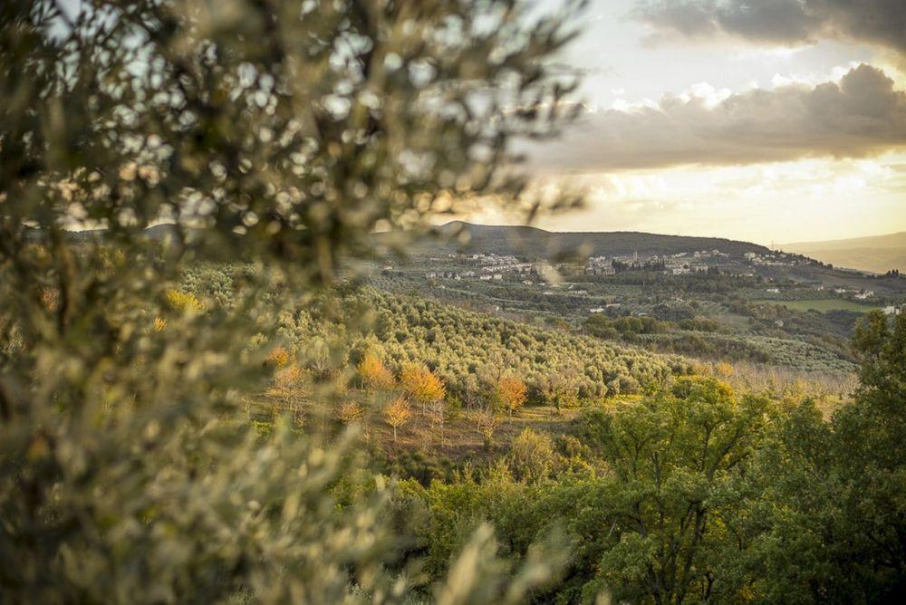 Die sanfte Hügel in Umbrien sind oft von Olivenbäume oder Weingarten bedeckt. Photo: frantoiaperti.net