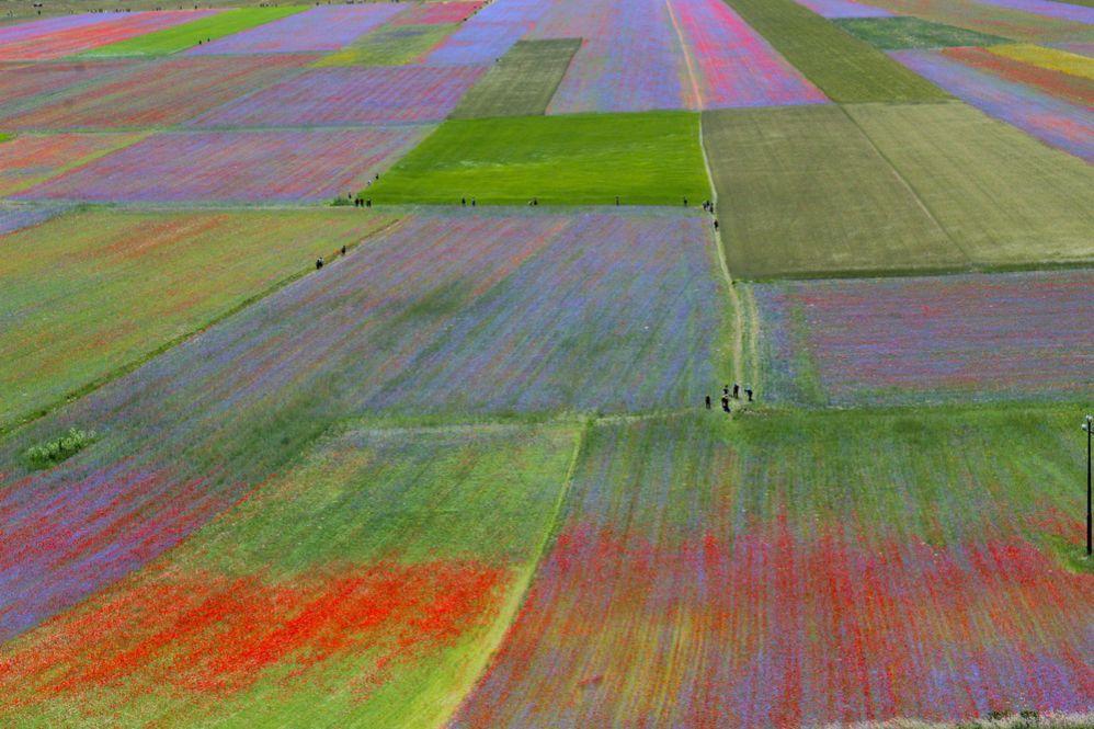 Das faszinierende Ereignis der bunten Felder auf der Ebene von Castelluccio di Norcia